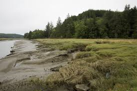 National Treasure Willapa Bay